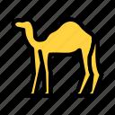 camel, desert, arab, culture, animal