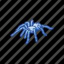 animal, arachnid, bird-eating spider, spider, tarantula icon