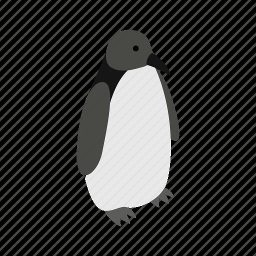 animal, argentina, bird, isometric, nature, penguin, wildlife icon