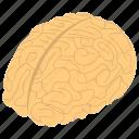 body organ, human brain, mind, neural system, thinking icon