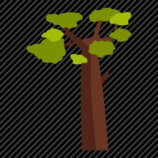 baobab, cool, nature, old, one, season, tree icon