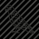 africal, animal, australian, bird, exotic, parrot, sitting