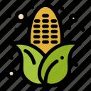 autumn, corn, food