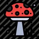 amanita, autumn, mushroom, poison