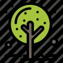 autumn, nature, plant, tree icon