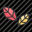 autumn, fall, leaf, leaves, nature, tree