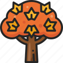 maple, fall, autumn, plant, wood, tree, nature