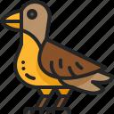 wing, wildlife, bird, animal, autumn, zoo, nature