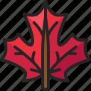plant, maple, leaves, canada, autumn, foliage, nature