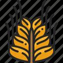 wheat, food, grain, rice, vegetable, harvest