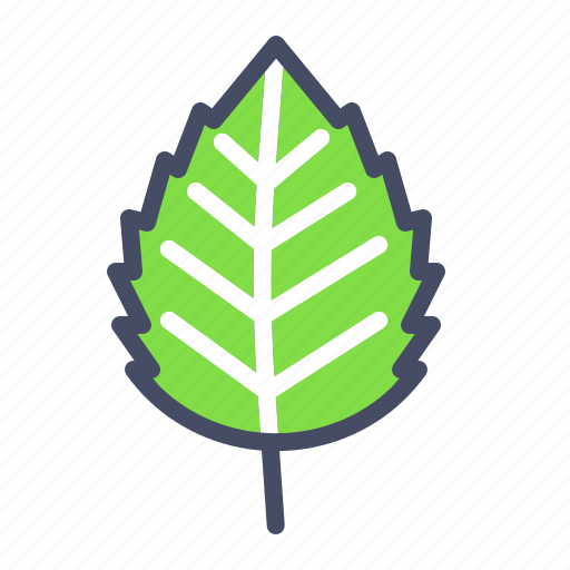Autumn, birch, elm, fall, leaf, nature, season icon - Download on Iconfinder
