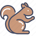 animal, autumn, squirrel