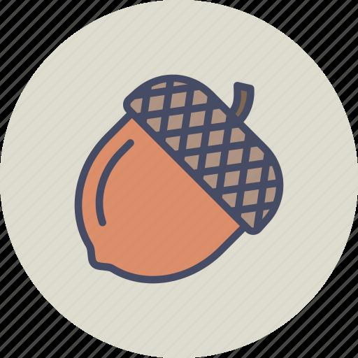 acorn, autumn, chestnut, nature, nut, oak, seed icon