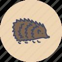 animal, autumn, cute, forest, hedgehog, pet, spikes