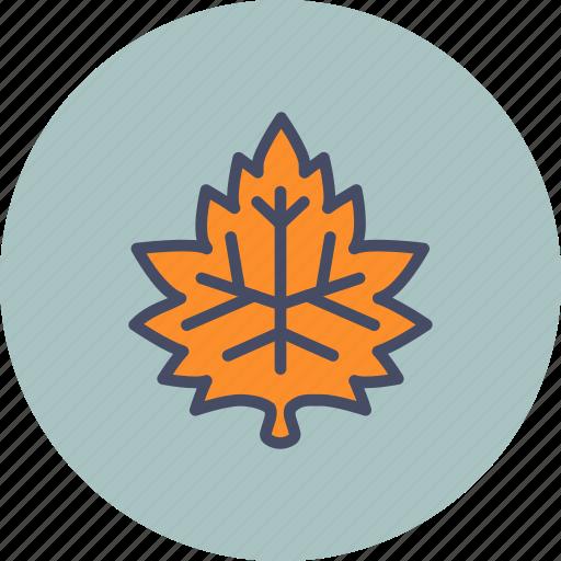 autumn, fall, garden, leaf, maple, nature, season icon