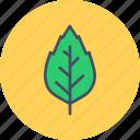 autumn, birch, elm, fall, leaf, nature, oak