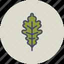 autumn, fall, garden, leaf, nature, oak, season