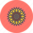 blossom, chrysanthemum, daisy, flower, spring, sunflower, thanksgiving