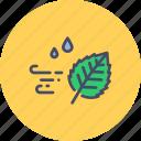 autumn, fall, leaf, season, weather, wind, windy