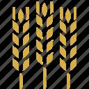 agriculture, crop, food, gluten, grain, harvest, wheat