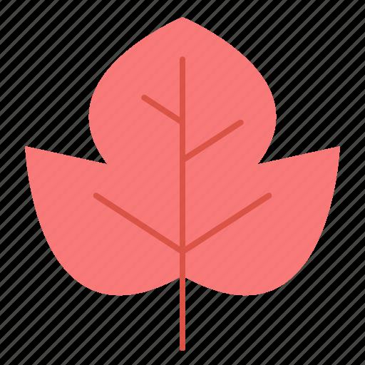 autumn, beech, fall, leaf icon