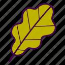 autumn, fall, leaf, oak, tree icon
