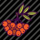 berries, leaves, rowan icon