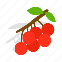 berry, branch, fruit, isometric, nature, red, rowan