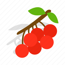 berry, branch, fruit, isometric, nature, red, rowan icon