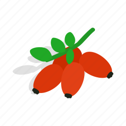 berry, briar, herbal, isometric, nature, red, tea icon