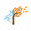 autumn, fall, isometric, nature, season, tree, wind icon
