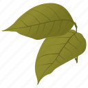 autumn leaves, betula papyrifera, birch leaves, fall leaves, leaves icon