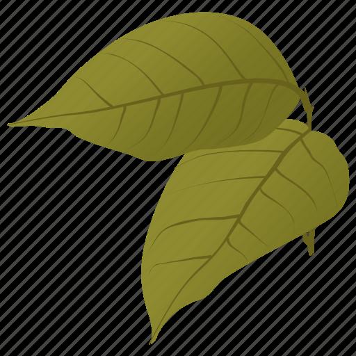 autumn leaves, betula papyrifera, birch leaves, fall leaves, leaves icon