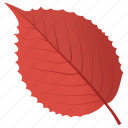 autumn leaf, dutch lem, elm leaf, foliage, leaf in fall icon