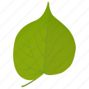 foliage, green leaf, leaf, linden leaf, tilia leaf icon