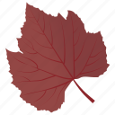 autumn leaf, foliage, leaf, leaf in fall, sycamore leaf icon