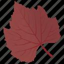 autumn leaf, foliage, leaf, leaf in fall, sycamore leaf icon