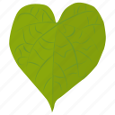 foliage, green leaf, heart shaped, leaf, tilia cordata icon