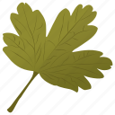 coriander leaf, foliage, hawthorn leaf, leaf, parsley leaf icon