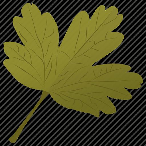 coriander leaf, foliage, hawthorn leaf, leaf, parsley leaf icon