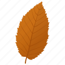 autumn leaf, dutch elm, elm leaf, foliage, leaf in fall icon