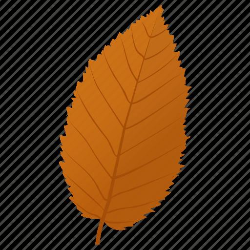 autumn leaf, dutch elm, elm leaf, foliage, leaf in fall icon