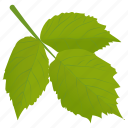 aspen leaves, foliage, leafy twig, leaves, spring aspen icon