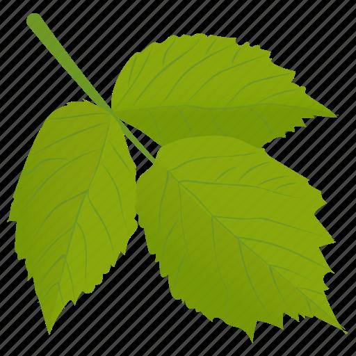 aspen leaves, foliage, leafy twig, leaves, spring aspen icon