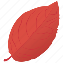 autumn leaf, foliage, leaf, leaf in fall, sweet birch icon