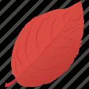 autumn leaf, foliage, leaf, leaf in fall, sweet birch