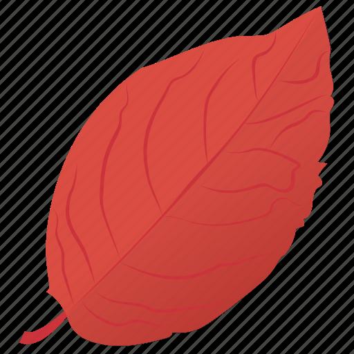 autumn leaf, foliage, leaf, leaf in fall, sweet birch icon