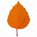 aspen leaf, autumn leaf, birch leaf, leaf in fall, orange leaf icon