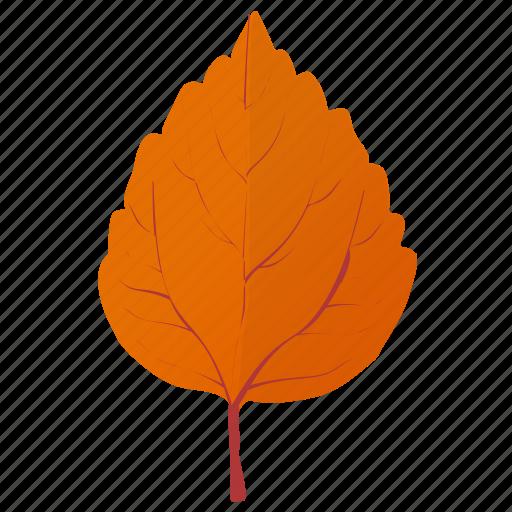 aspen leaf, autumn leaf, birch leaf, leaf in fall, orange leaf icon