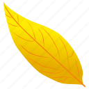 autumn leaf, foliage, leaf, leaf in fall, yellow birch icon